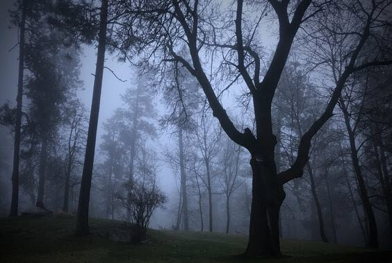 DSHS IN ACTION: Medical Lake Forest in Fog