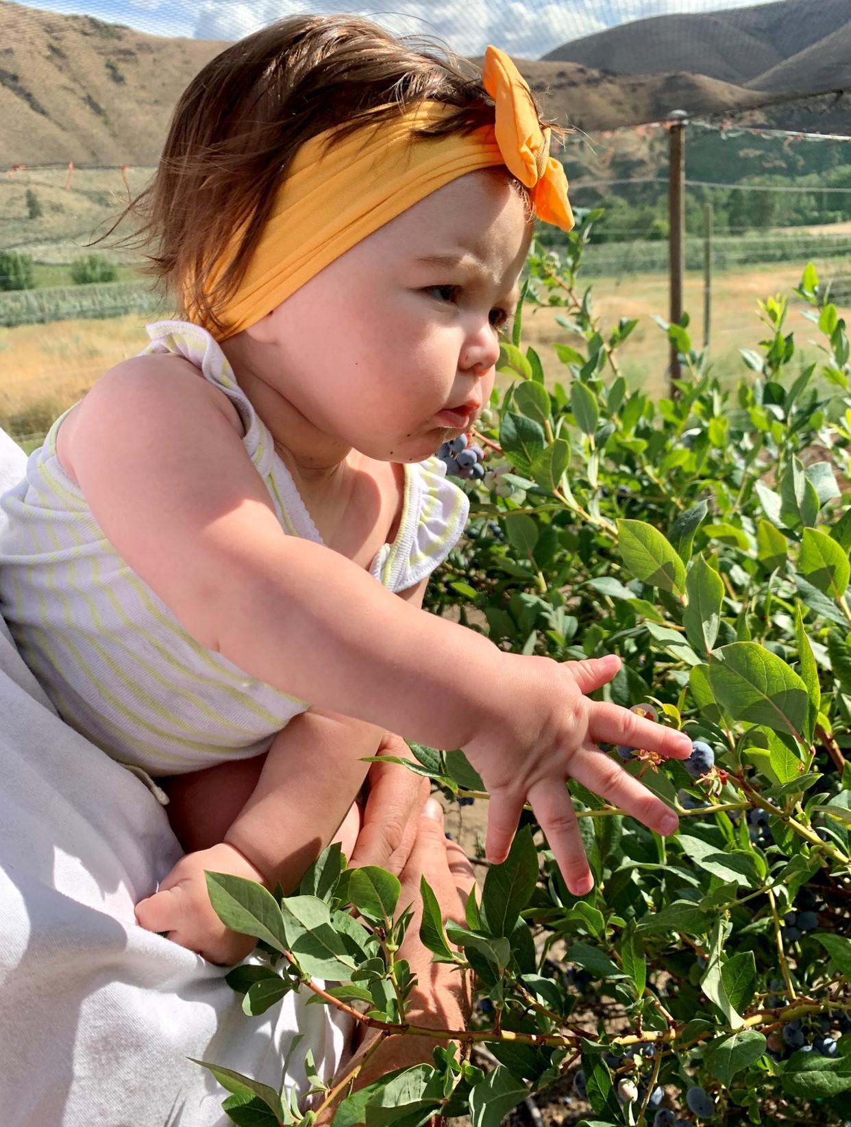 DSHS Family: Picking Blueberries